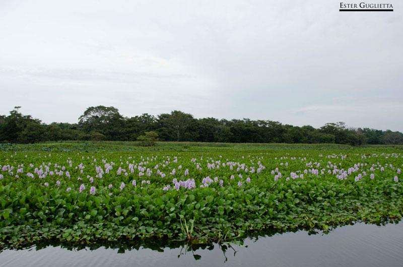 Lago Hiriwadunna