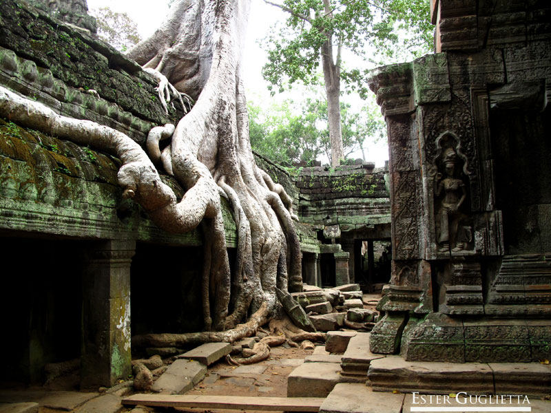 Ta Prohm templo