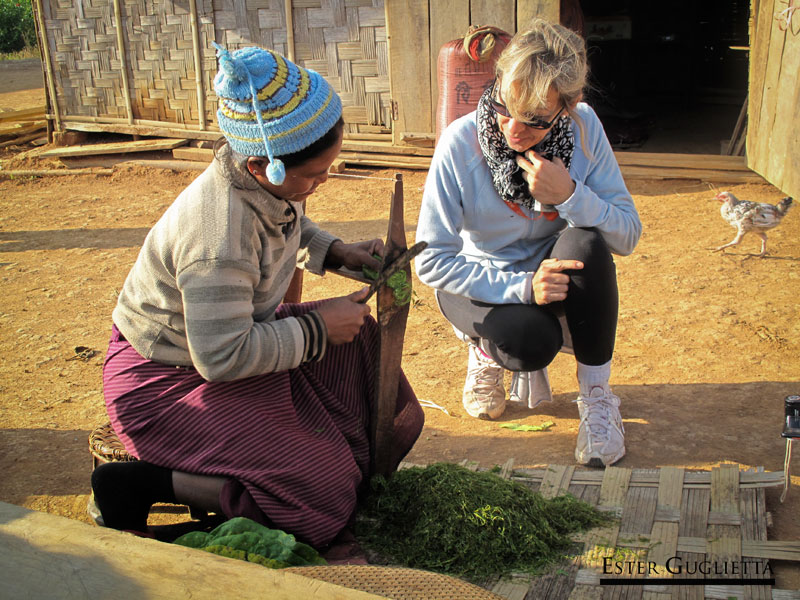 Mujer cortando hojas de tabaco
