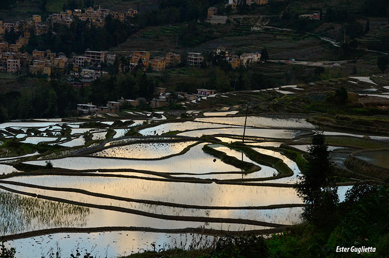 Yuangyang